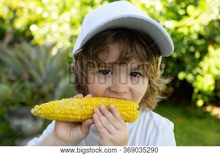 Child In The Garden, Corn - Lovely Boy Eating Corn On The Cob In The Garden. Portrait Of A Cute Boy