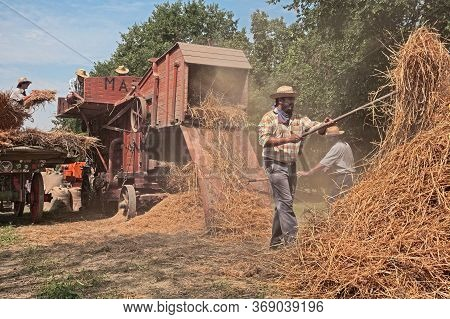 Farmers Re-enacting The Old Farm Works With An Ancient Threshing Machine Loaded With Ears Of Corn Du