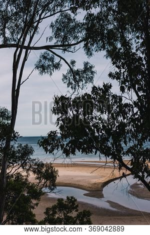 Exotic And Wild-looking Beach With Thick Vegetation Near The Shore And No People Shot In Tasmania