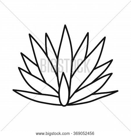 Isolated Object Of Agave And Tequila Icon. Web Element Of Agave And Blue Vector Icon For Stock.