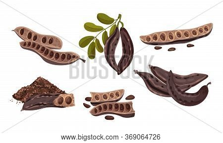 Carob Plant Edible Pods Isolated On White Background Vector Set