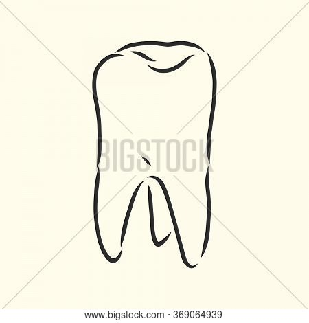 Hand-drawn Black Lines Sketch Molar, Tooth. Doodle Drawing. Object, Element, Icon Component For Illu