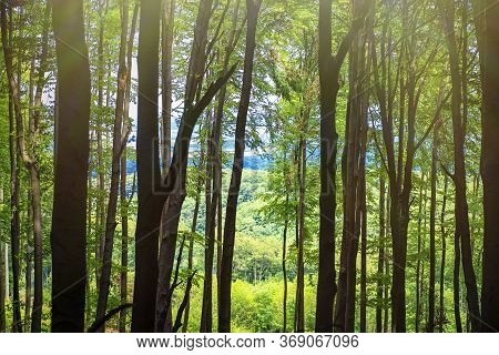 Summer Warm Sunny Day In The Forest.bright Green Forest Natural Walkway In Sunny Day Light.sun Throu