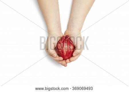 Heart Surgery Concept, Baby Hands Holds Organ On White Background. Life Saving And Transplantation.