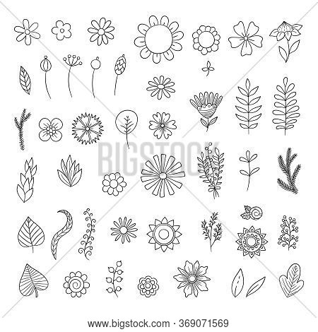 Flowers Doodle. Simple Floral Botanical Collection Leaves Flowers Branches Vector Organic Nature Sym