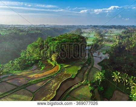 Flooded Fields For Rice Cultivation Seen From Above. Rice Terraces And Tropical Forest In Bali. Aeri
