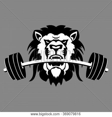 Lion Barbell, Illustration Of Lion Biting Barbell Vector Illustration, Suitable For Sports Company L