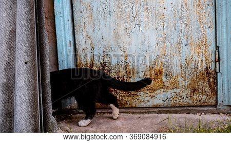 Black Cat Hiding In The Street.black Cat Hiding In The Street