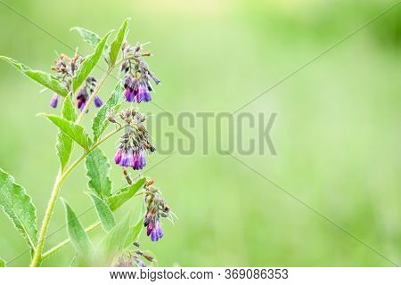 Wild Flowers Growing Outside In Countryside Over A Green Grass Background