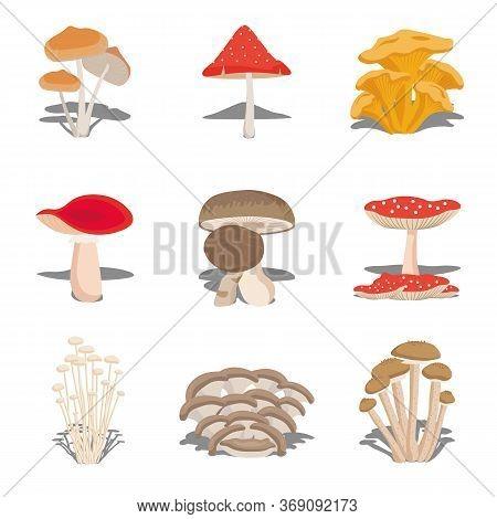 Edible Mushrooms Set. Vector Illustration Of Different Types Of Mushrooms, Different Kinds Of Edible