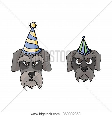 Cute Cartoon Schnauzer Dog And Puppy Face With Party Hat Vector Clipart. Pedigree Kennel Doggie Bree