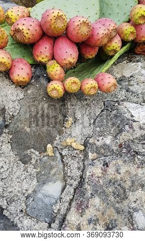 Prickly Pear Plants An Old Stone Wall In Apulia