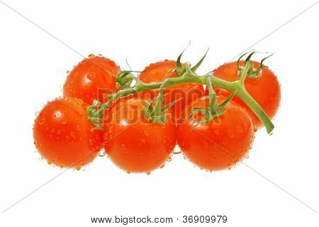 Truss Of Tomatoes