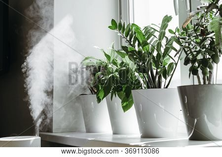 Humidification For Cultivation Of House Plants. The Steam From The Air Humidifier In The Room.