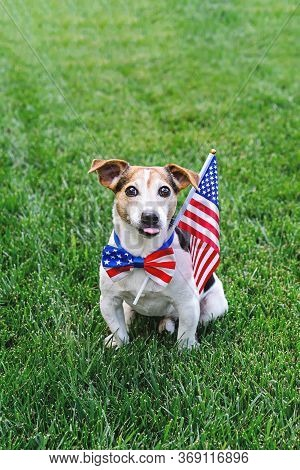 Dog Sitting On Grass Wears American Flag Bow Tie With Usa Flag On Green Grass. Celebration Of Indepe
