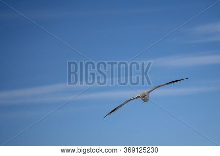 Seagull In Blue Sky Clouds. Seagull Flying In Blue Sky. Seagull Flying In Sky