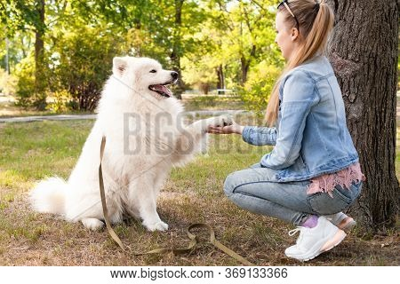 A Girl Treats A Dog Against Ticks And Fleas. Spray From Parasites For Animals. White Samoyed In The