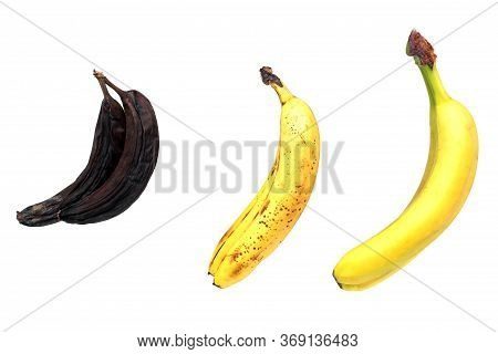 Ripe, Over-ripe And Spoiled Bananas On A White Background. The Concept Of Proper Food Storage. The C