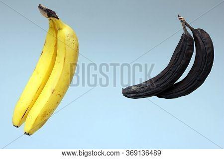 Ripe Bananas. Spoiled Blackened Bananas. The Concept Of Proper Food Storage.