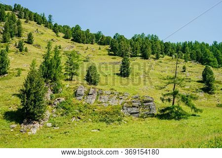 Wonderful View To Beautiful Green Hill Slope With Coniferous Trees And Rocks Under Clear Blue Sky. V