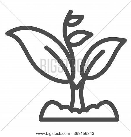 Sprout Grows With Many Leaves Line Icon, Gardening Concept, Sprout Symbol On White Background, Growi