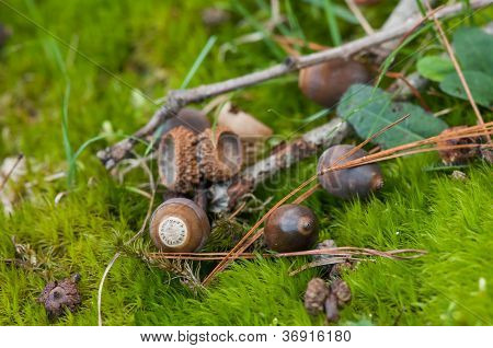 Acorns On The Forest Floor