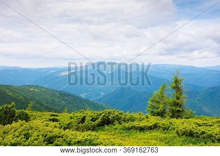 Mountain Landscape With Tree On The Hill. Beautiful Scenery On A Cloudy Day At High Noon. Mighty Bla