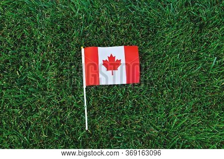 Canadian Flag On Green Grass Background. Happy Canada Day. 1st July Celebrate National Holiday Of Ca