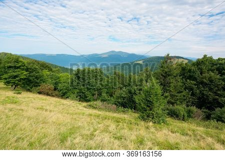 Green Nature Landscape In Mountains. Beautiful Scenery With Beech Forest On The Hill. High Peak In T