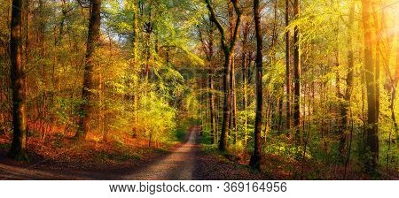 Gold Forest Scenery With Rays Of Warm Light Illumining The Foliage And A Footpath Leading Into The S