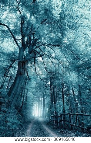 Dreamy, Misty Forest Scenery With Toned Monochrome Cool Color, A Path Under A Large Tree Leading Int