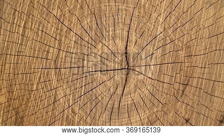Cross Section Of The Tree. The Texture Of The Cut Tree.