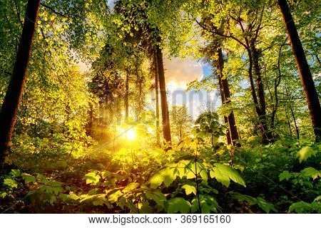 Luminous Scenery In A Forest Clearing Or Park, With The Foliage Nicely Illuminated By The Warm Sunse