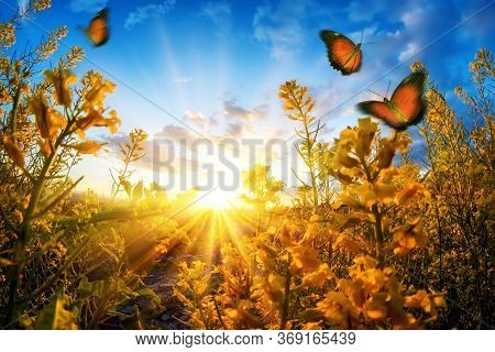 Bright Rural Sunset Seen Through Blossoms On A Meadow, With Butterflies Roaming In The Air And Deep