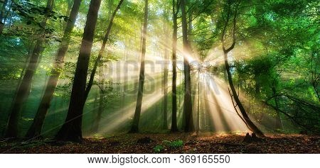 Luminous Rays Of Sunlight Shining Through The Mist And Green Foliage In A Forest Clearing, A Panoram