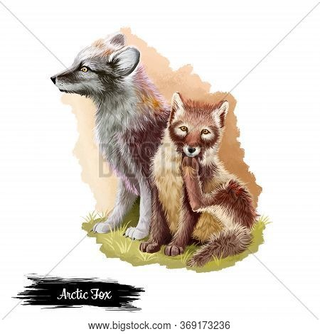 Arctic Fox Isolated On White Background Digital Art Illustration. Grown Up Animal And Cute Cub Sitti