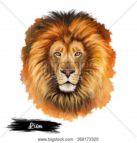 Lion Head Isolated On White Background Digital Art Illustration. Wildlife Dangerous Animal, Leo Astr