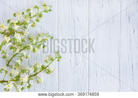 Chestnut Tree Flowers On A Light Wooden Background. Spring Background With Chestnut. Flat Lay, Top V