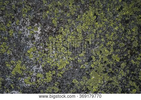 Lichen On A Green Stone. Natural Background. Stones Boulders Covered With Moss And Fungus.nature Bac