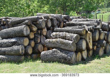 Fire Wood Prepared For Next Winter Season