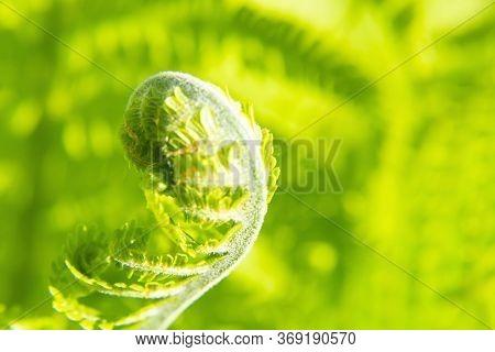 Green Forest Fern Petals. Fern Pattern Macro. Background