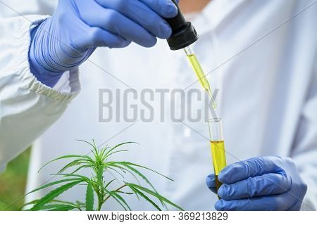Researchers Hands Pouring Oil In A Science Glass Tube Researchers Are Researching Hemp Oil The Conce