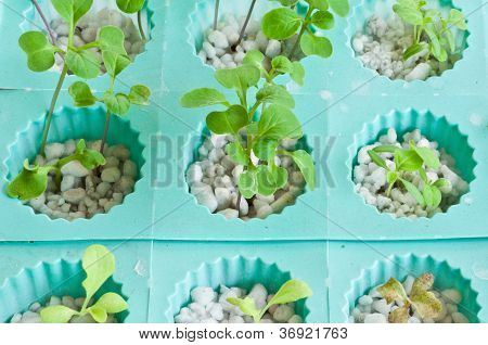 Soilless Or Hydroponic