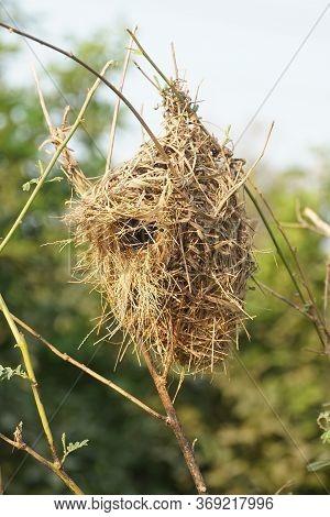 Close Up Bird Nest In Nature Garden