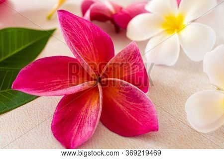 Exotic Frangipani Flowers On A Light Background, Pink And White Plumeria, Tropical Plants, Closeup O
