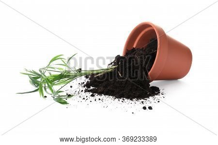 Overturned Terracotta Flower Pot With Soil And Plant Isolated On White