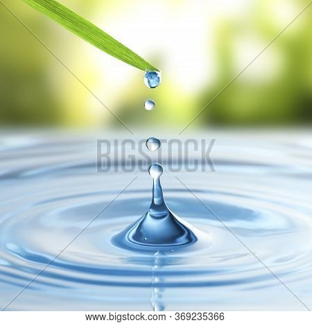Water Drops Falling From Grass Blade Into Water On Sunny Day, Closeup. Ecology Protection
