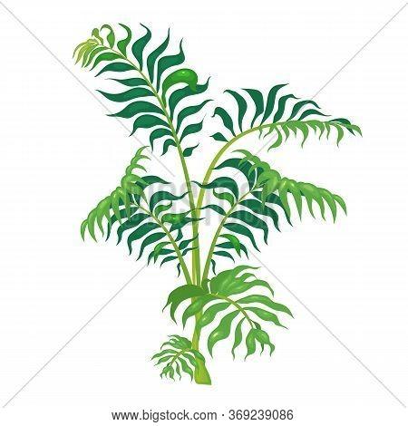 Jungle Vegetation Cartoon Vector Illustration. Fern Leaves On Green Stem. Lush Shrub For Subtropical
