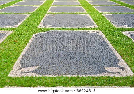 Path With Grass Growing