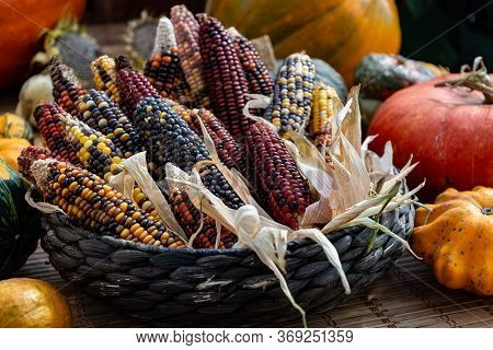 Pumpkins And Corncobs With Colorful Seeds In The Straw Basket. Autumn Still Life
